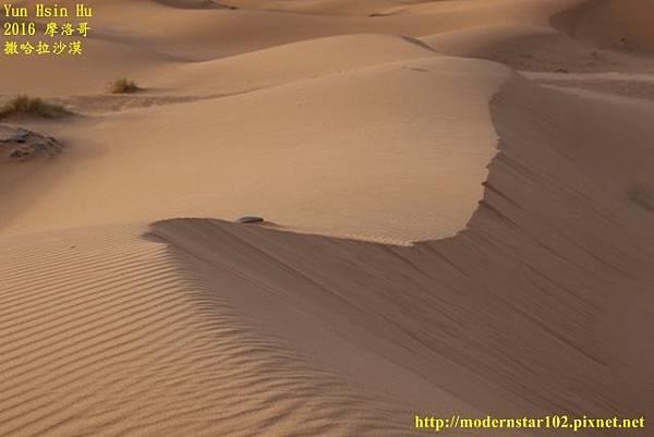 1050409撒哈拉沙漠894A7518 (640x427).jpg