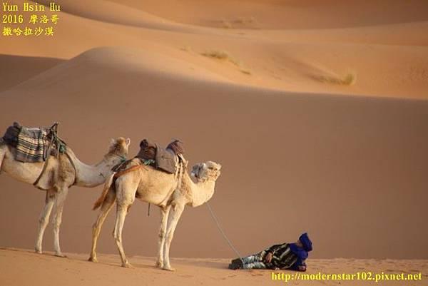 1050409撒哈拉沙漠894A7541 (640x427).jpg