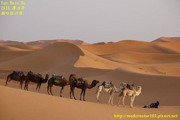1050409撒哈拉沙漠894A7544 (640x427).jpg