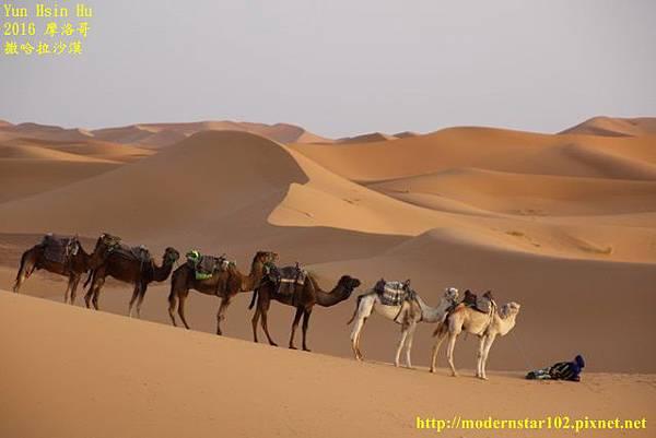 1050409撒哈拉沙漠894A7546 (640x427).jpg