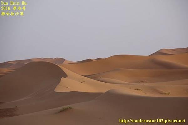 1050409撒哈拉沙漠894A7534 (640x427).jpg