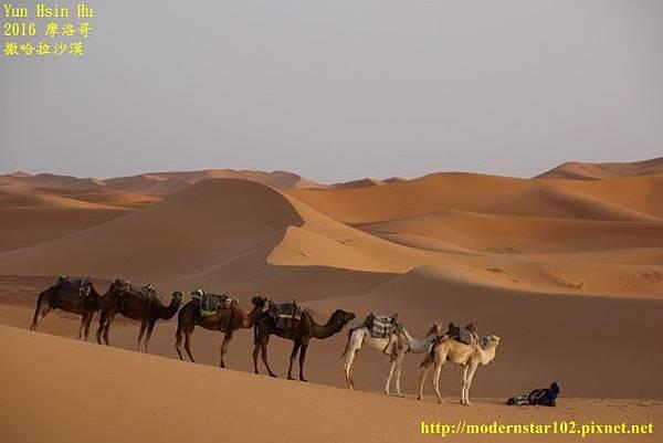 1050409撒哈拉沙漠894A7542 (640x427).jpg