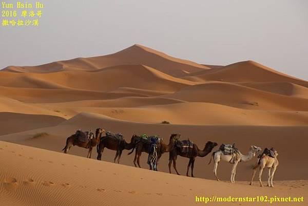 1050409撒哈拉沙漠894A7556 (640x427).jpg