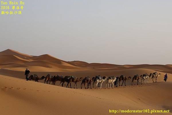 1050409撒哈拉沙漠894A7564 (640x427).jpg