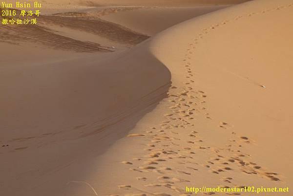 1050409撒哈拉沙漠894A7551 (640x427).jpg