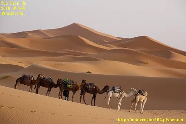 1050409撒哈拉沙漠894A7553 (640x427).jpg