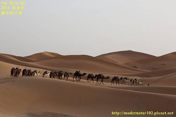 1050409撒哈拉沙漠894A7568 (640x427).jpg