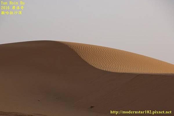 1050409撒哈拉沙漠894A7586 (640x427).jpg