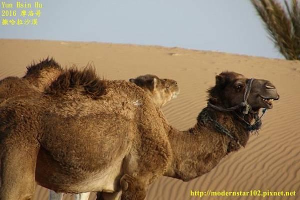 1050409撒哈拉沙漠894A7621 (640x427).jpg