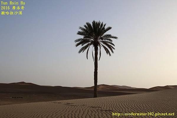 1050409撒哈拉沙漠894A7611 (640x427).jpg