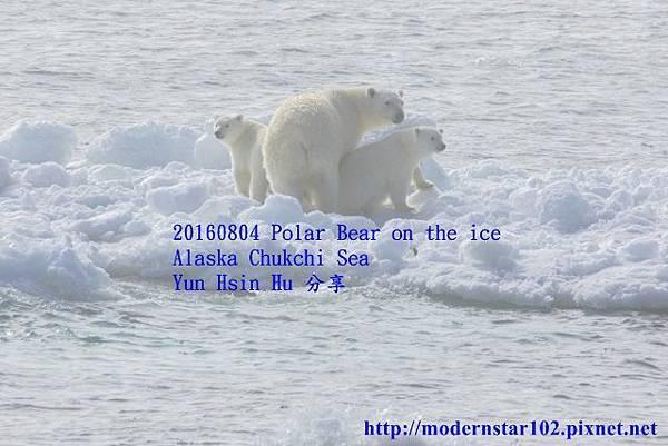 1050804polar bear894A9143-1 (640x427).jpg