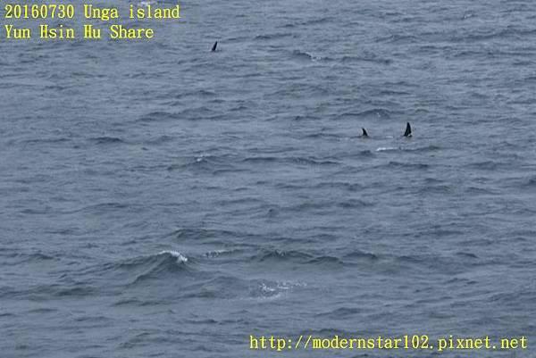 20160730Unga island894A1526 (640x427).jpg
