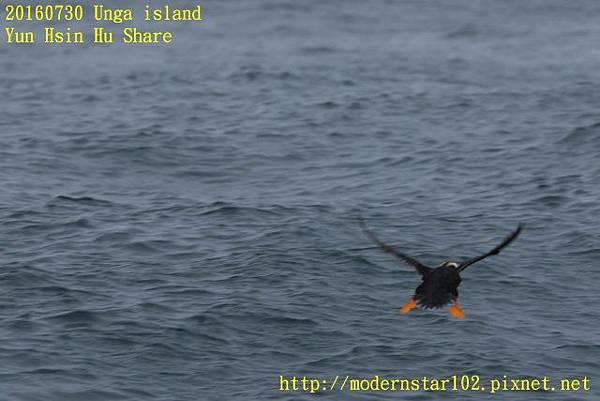 20160730Unga island894A1684 (640x427).jpg