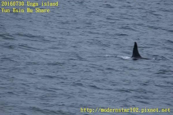 20160730Unga island894A1364 (640x427).jpg