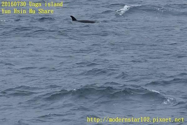 20160730Unga island894A1541 (640x427).jpg