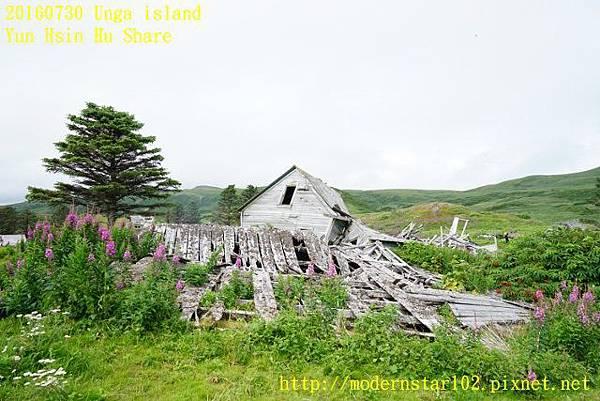 20160730Unga islandDSC01831 (640x427).jpg