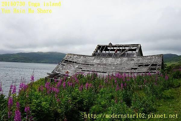 20160730Unga islandDSC01867 (640x427).jpg