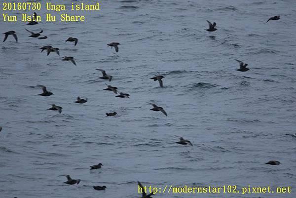 20160730Unga island894A2622 (640x427).jpg