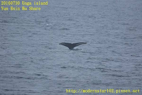 20160730Unga island894A2718 (640x427).jpg