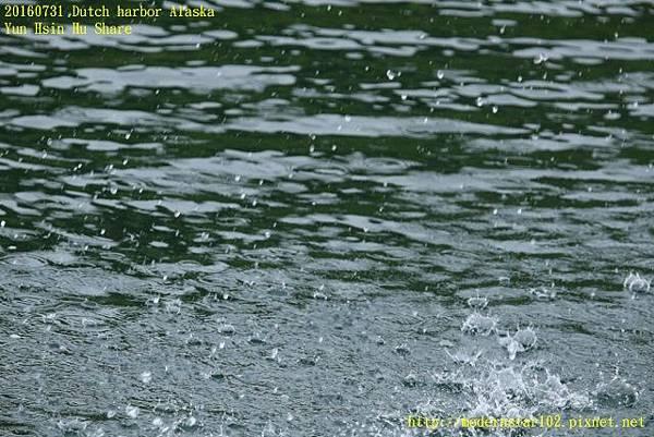 20160731Dutch harbor Alaska894A3697 (640x427).jpg