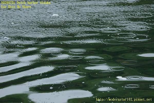 20160731Dutch harbor Alaska894A3808 (640x427).jpg