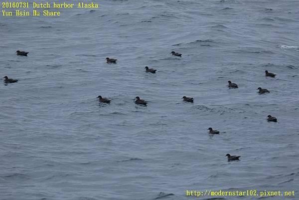 20160731Dutch harbor Alaska894A4228 (640x427).jpg