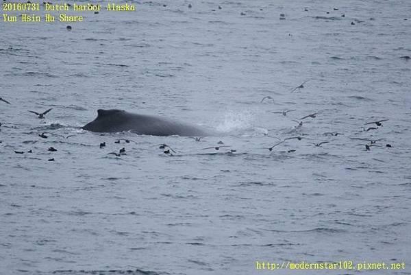 20160731Dutch harbor Alaska894A4163 (640x427).jpg