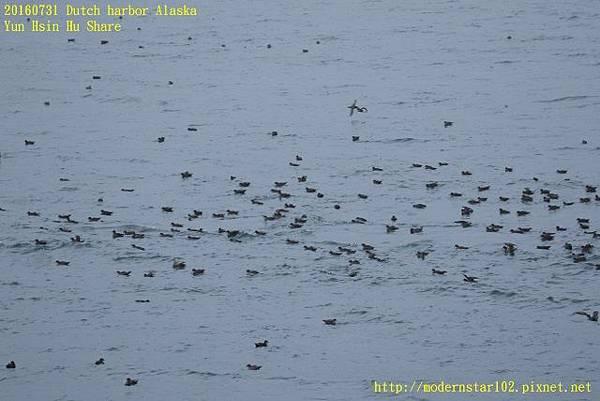 20160731Dutch harbor Alaska894A4295 (640x427).jpg