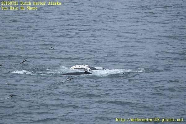 20160731Dutch harbor Alaska894A4315 (640x427).jpg