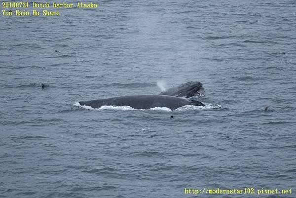 20160731Dutch harbor Alaska894A4300 (640x427).jpg