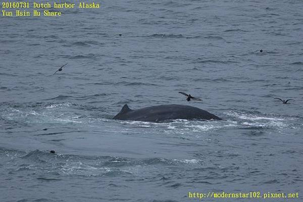 20160731Dutch harbor Alaska894A4477 (640x427).jpg