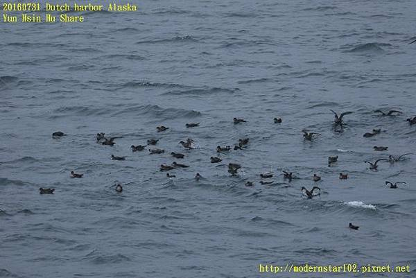 20160731Dutch harbor Alaska894A4490 (640x427).jpg
