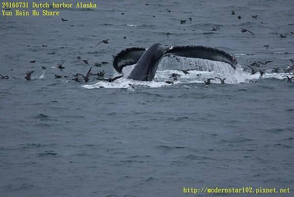 20160731Dutch harbor Alaska894A4725 (640x427).jpg