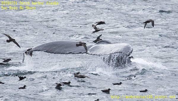 20160731Dutch harbor Alaska894A4658-1 (640x362).jpg