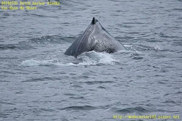20160731Dutch harbor Alaska894A4757 (640x427).jpg