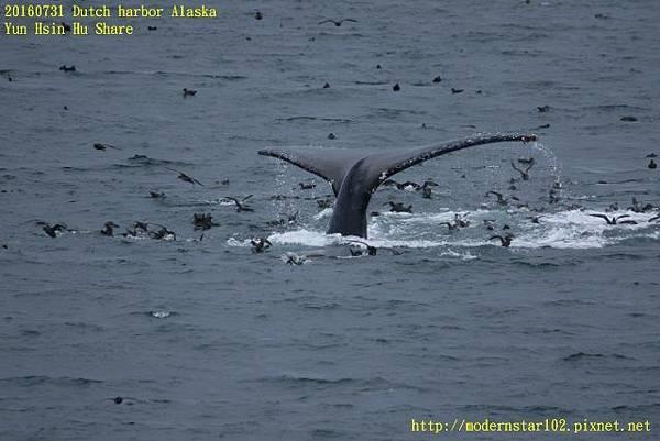 20160731Dutch harbor Alaska894A4730 (640x427).jpg