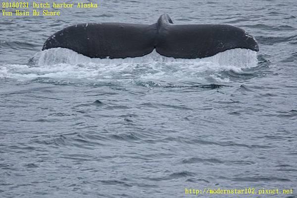 20160731Dutch harbor Alaska894A4771 (640x427).jpg
