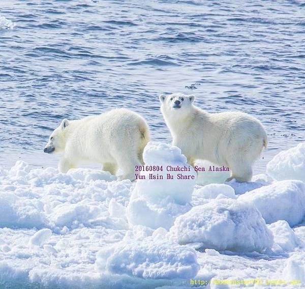 20160804Chukchi Sea polar bear894A9222-1 (640x605).jpg