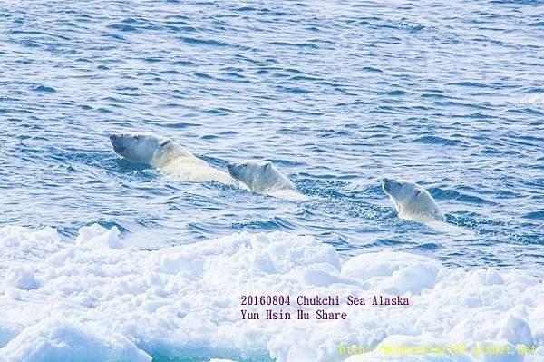 20160804Chukchi Sea polar bear894A9240-1 (640x425).jpg