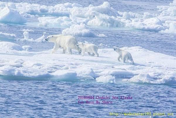 20160804Chukchi Sea polar bear894A9318-1 (640x427).jpg
