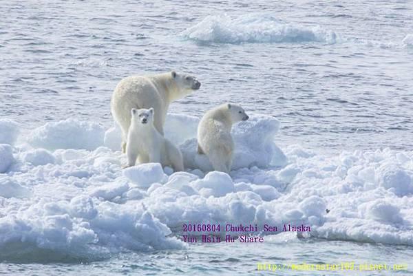20160804Chukchi Sea polar bear894A9173-1 (640x427).jpg