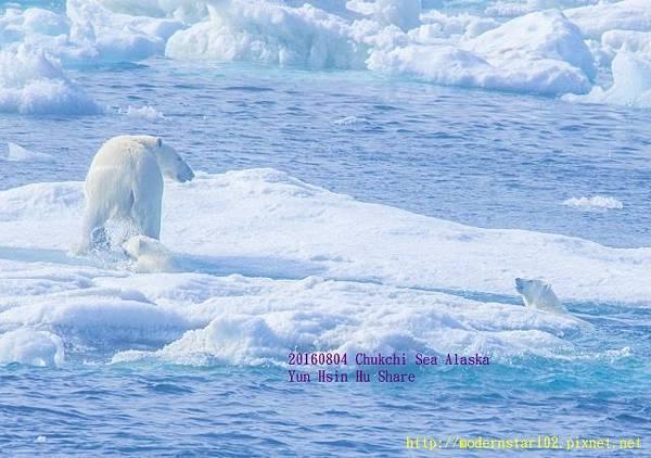 20160804Chukchi Sea polar bear894A9289-1 (640x450).jpg