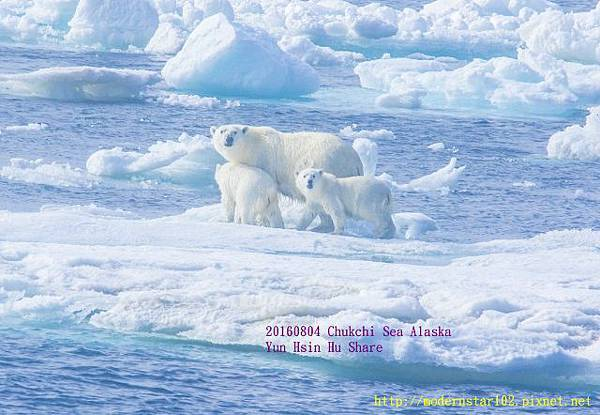 20160804Chukchi Sea polar bear894A9328-1 (640x442).jpg
