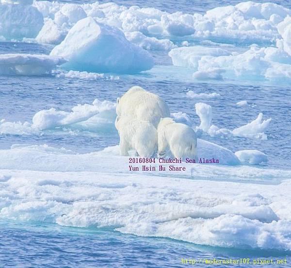 20160804Chukchi Sea polar bear894A9333-1 (640x589).jpg
