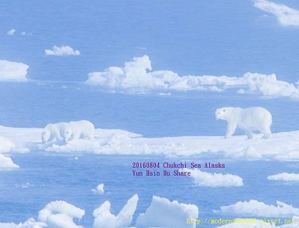 20160804Chukchi Sea polar bear894A9443-1 (640x487).jpg