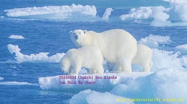 20160804Chukchi Sea polar bear2894A0068-1 (640x356).jpg