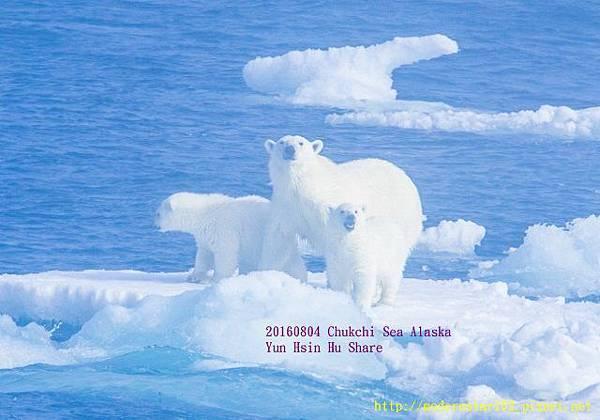 20160804Chukchi Sea polar bear894A9994-1 (640x447).jpg