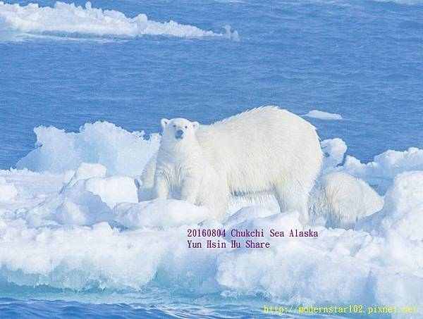 20160804Chukchi Sea polar bear894A9804-1 (640x483).jpg