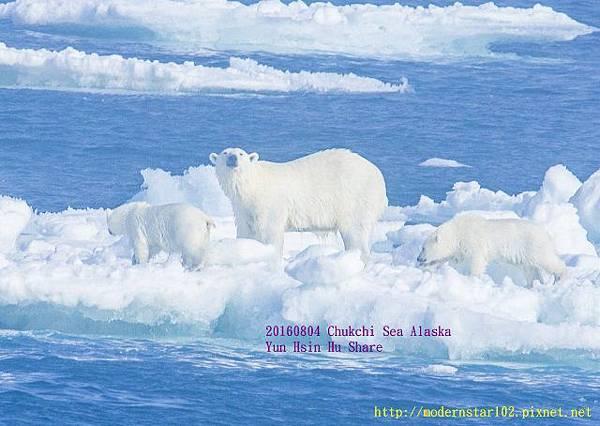 20160804Chukchi Sea polar bear894A9786-1 (640x454).jpg