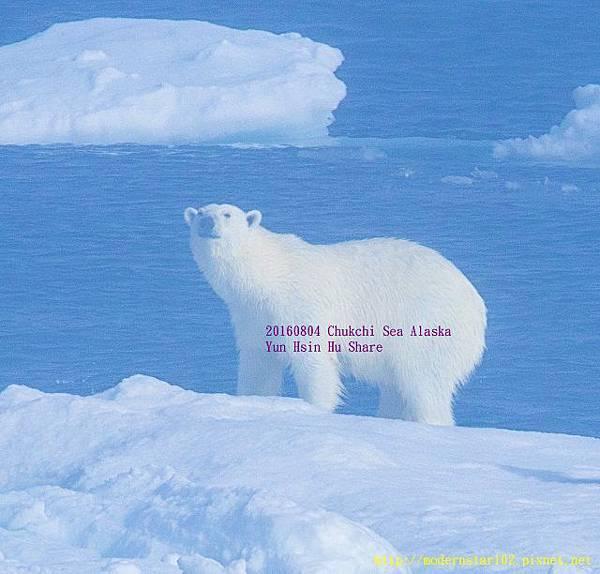 20160804Chukchi Sea polar bear894A9560-1 (640x612).jpg